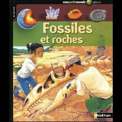 Fossiles et roches