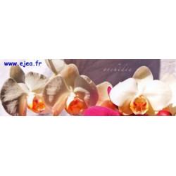 Carte marque-page Orchidée