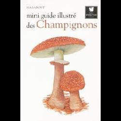 Mini guide illustré des champignons