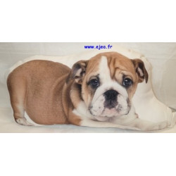 Coussin forme Chiot Bouledogue